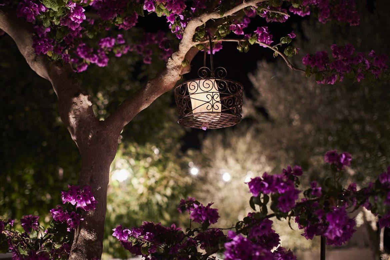 Albero in fiore Masseria Almadava
